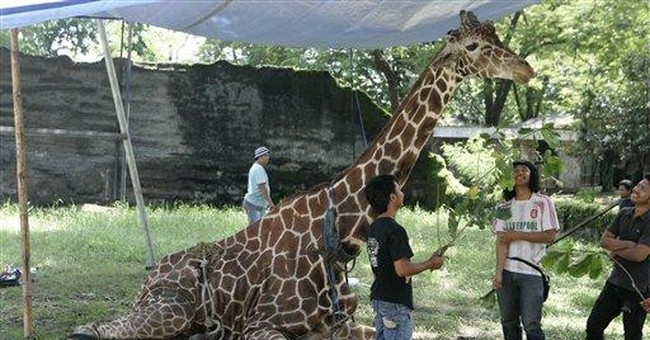 Indonesia zoo giraffe dies with plastic in stomach