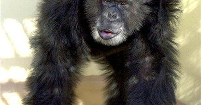 Genome study finds some gorilla DNA aping our own
