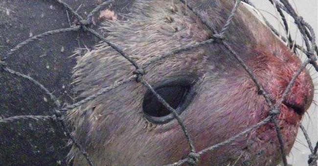 Sick Alaska seal shows possible spread of disease