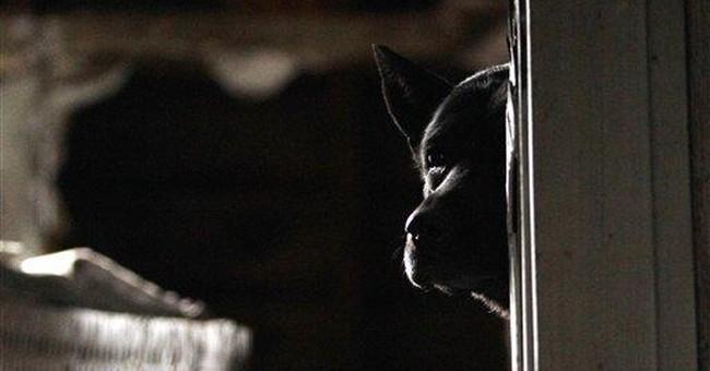 Detroit dog lovers push city's 1st no-kill shelter