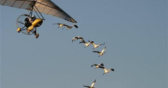 Bird plane runs afoul of federal regulators