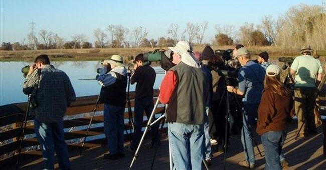 Rare Asian duck draws bird watchers to Calif.