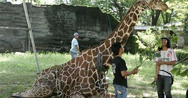 Nightmare zoo in Indonesia shaken by giraffe death