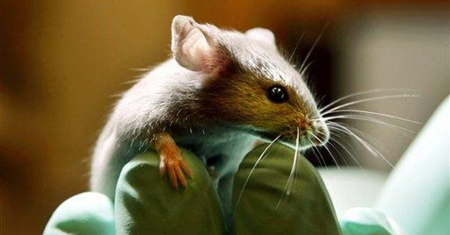 Experts: Not importing mice hurts UK science