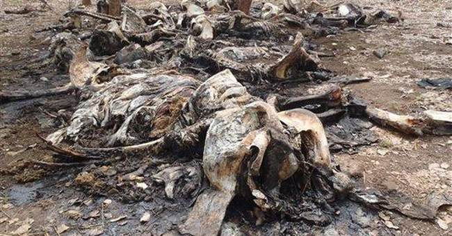 WWF: Elephant killing continues in Cameroon