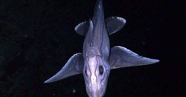 James Cameron, others to explore the real abyss