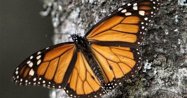 Monarch butterflies drop 28 percent in Mexico
