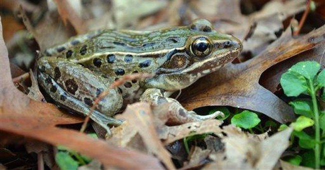 New frog species found in NYC area