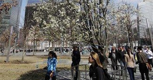 9/11 'Survivor Tree' blossoms at start of spring