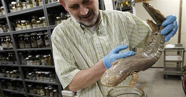 Oldest US natural history museum offers rare peek