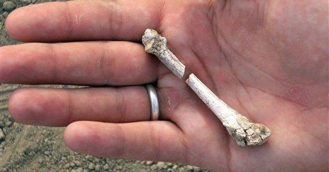 Foot find shows prehuman walked same time as Lucy