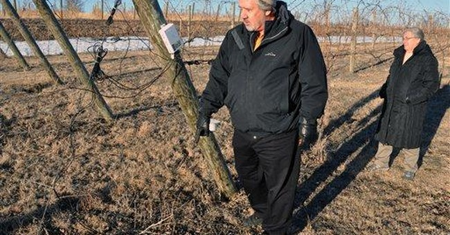 Northern vintners work to improve wines' quality