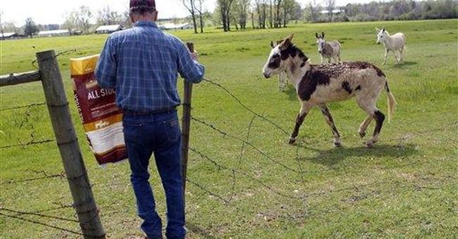 Hundreds of donkeys abandoned in lingering drought