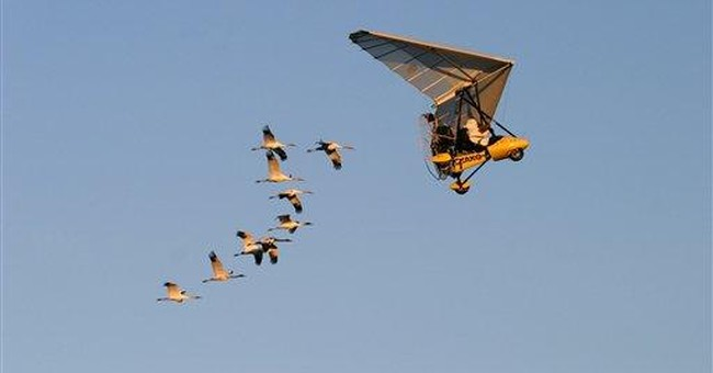 FAA says pilots can guide whooping cranes