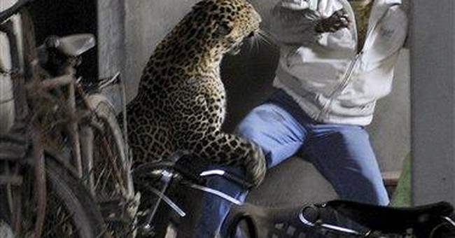 Leopard kills man, scalps another in Indian city