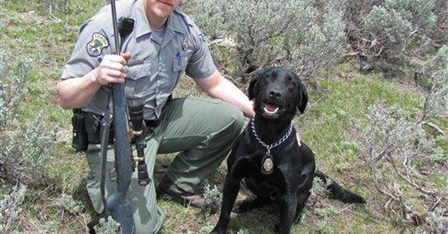Gun-sniffing dog, blood splotch, nab elk poachers