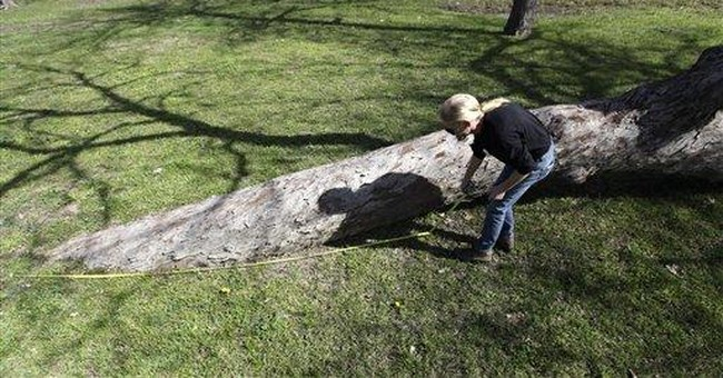 Groups identify trees bent by American Indians