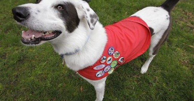 Dog Scouts of America have troops in 22 states