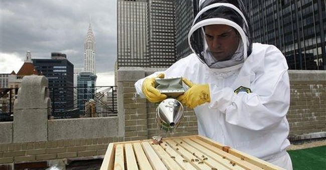 Perils of Commercial Beekeeping