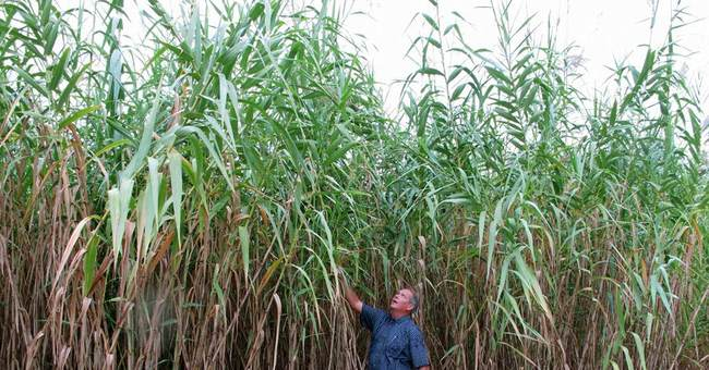 This One Crucial Trait May Determine The Winner Of The Biofuel Wars