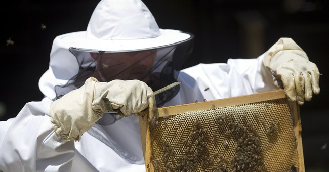 Honeybees trained in Croatia to find land mines