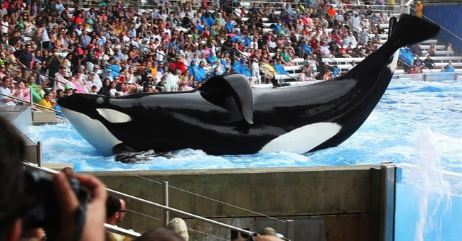 'Blackfish' doc looks at SeaWorld's captive whales