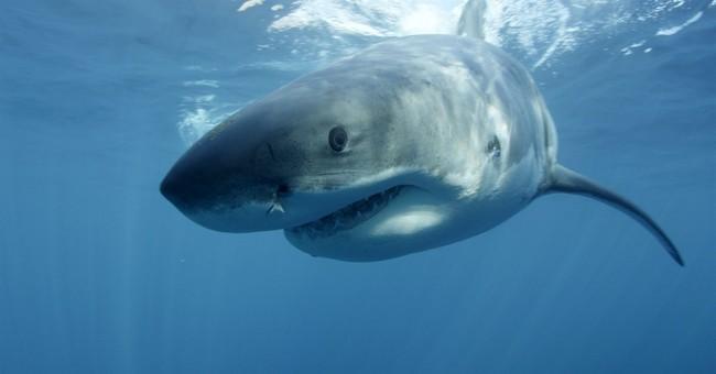 Pair of stunts has networks thinking 'Sharknado'