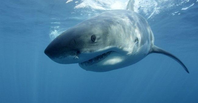 Discovery hammered for shark special