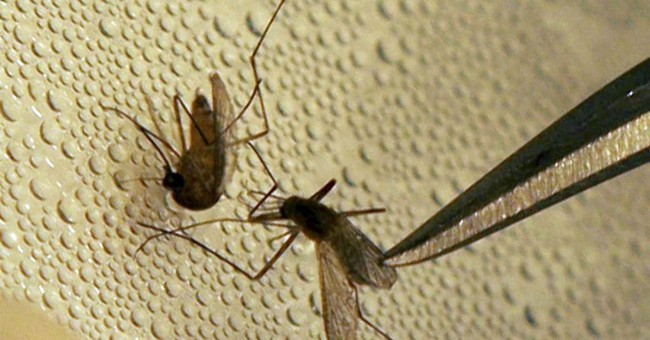 Flu? Malaria? Disease forecasters look to the sky