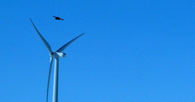 Wind energy company pleads guilty to eagle deaths