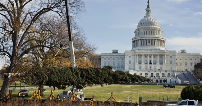 Capitol Christmas tree arrives in Washington, DC