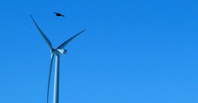 US to allow eagle deaths _ to aid  wind power