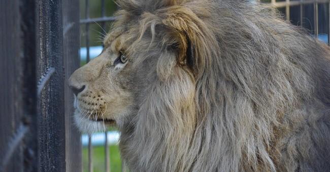 PETA IS FULL OF SHEETA: Anti-Hunters Go Apoplectic Over Melissa Bachman's Lion Hunt