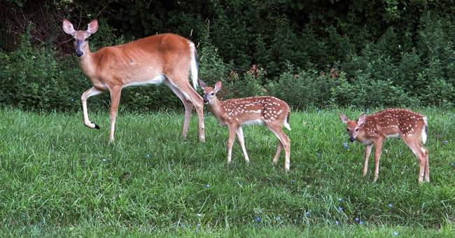 Why Did Bureaucrats Kill Giggles the Baby Deer? Because They Can