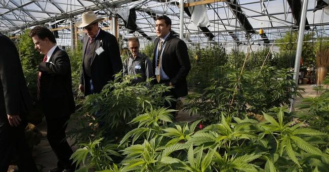 Marijuana Moves Into the Mainstream