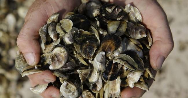 Salmonella decline seen in food poisoning report