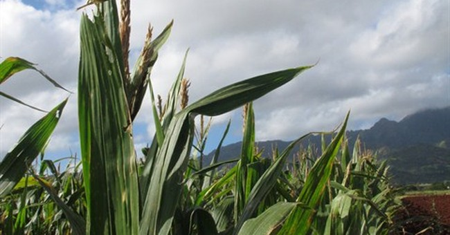 Hawaii is genetically engineered crop flash point