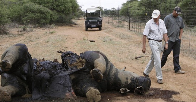 Thieves steal rhino horns in South Africa