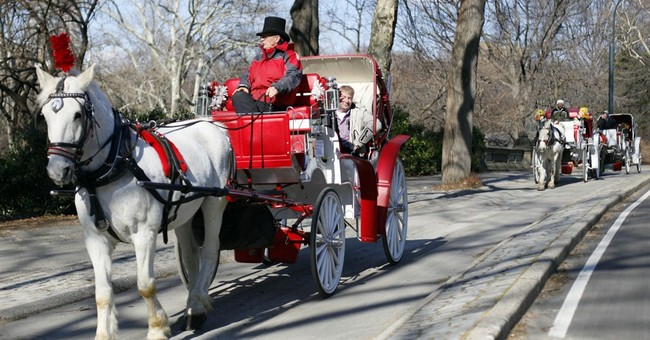 Whoa there: NYC carriage horse ban is stalled