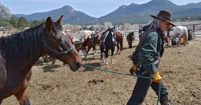 Big riders mean big horses on Western trails