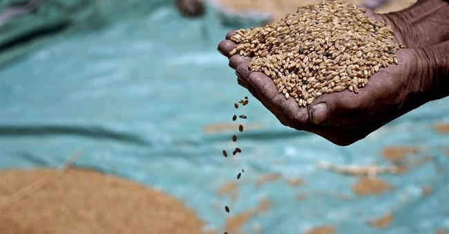 Egypt tries to save money on wheat subsidies