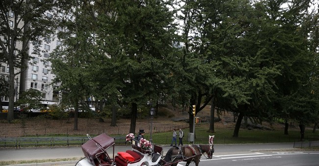 NYC carriage driver accused in horse switch