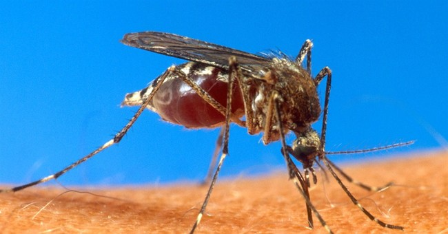Newly arrived virus spreads in Dominican Republic