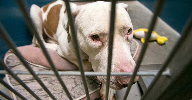 Dog that mauled boy to live in sheriff's shelter