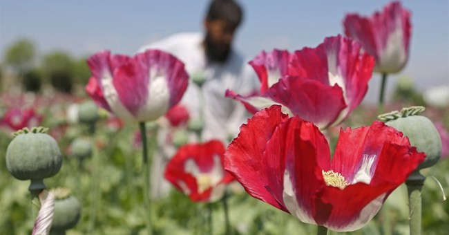 As US draws down, Afghan opium production thrives