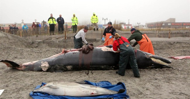 Whale washes up in New Jersey, gets graffiti tag