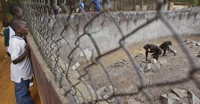 Ivory Coast tries ecotourism to save chimpanzees