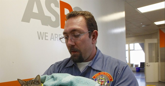 Group starts big pet-rescue project in California
