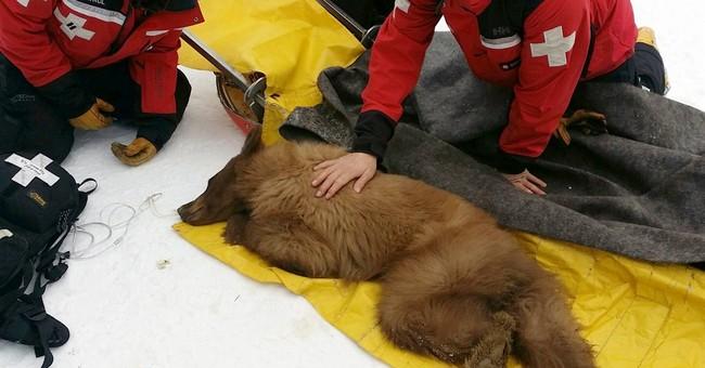 Ski resort bear released in wild returns to Tahoe