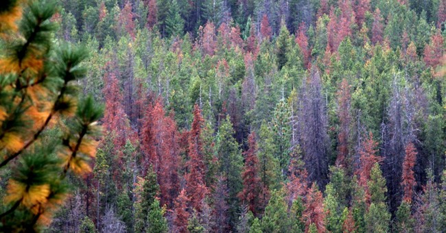 Climate change increasing risks in Northwest